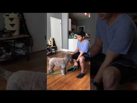 *Must Watch!!* Super Smart and Cute Dog/Puppy who know's Sign Language!