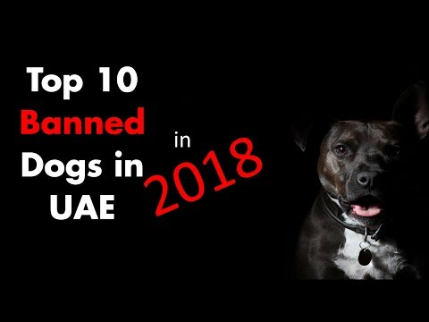 Top 10 Banned Dogs in UAE