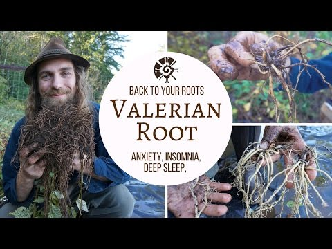 Valerian - Back to Your Roots with Yarrow Willard Cl.H | Harmonic Arts