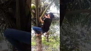 Gambar cover Gadis panjat pohon kelapa. Woww!!!