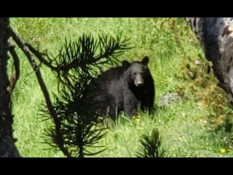 Yellowstone National Park (3/4): BEAR