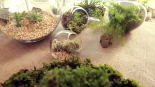 Aprenda a fazer microjardins | Learn how to make smalls gardens