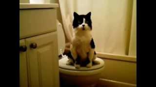 Очень умный кот. Very clever cat.
