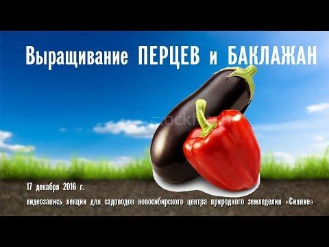 Выращивание перцев и баклажан