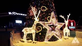 Уличная ёлка Звёздная сказка. Ёлкин Дом | Christmas Tree Starry fairy tale. Elkin Dom