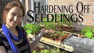 Hardening Off Seedlings - Seed Starting Basics - on How to Grow a Garden with Scarlett