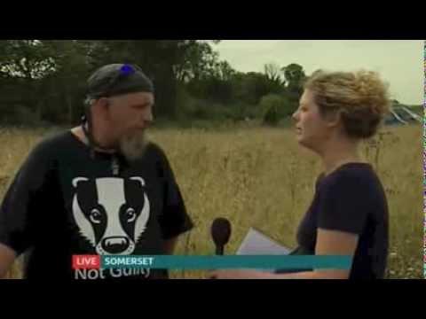 First pilot badger cull begins ITV NEWS...