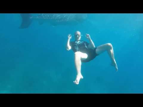 Whalesharks Philippines Cebu Oslob