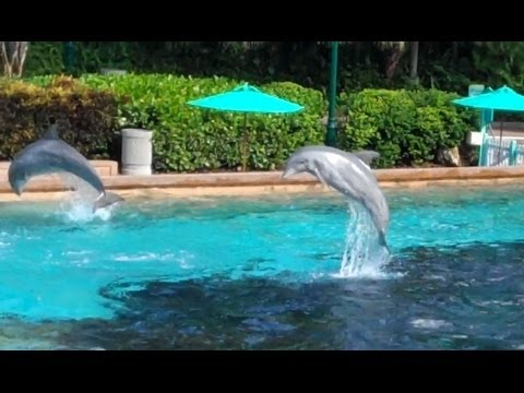Key West Dolphin Cove Training Session