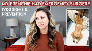 MY FRENCHIE HAD EMERGENCY SURGERY (SLIPPED DISC SIGNS + PREVENTION)
