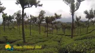 Drive Through Munnar