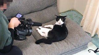 テレビ撮影にも動じない猫