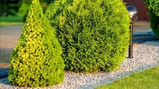 Drzewa i Krzewy Ozdobne liściaste oraz iglaste do ogrodu