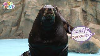 Wild Family, Steller Sea Lion #02, 스텔라 바다사자 20140801