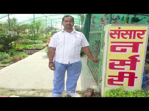 Plant Nursery Varanasi Sansar Nursery One of The Best Indian Nurseries