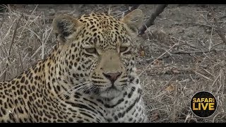 safariLIVE - Sunrise Safari - October 28, 2018
