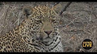 safariLIVE - Sunrise Safari - October 28, 2018