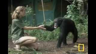 Jane Goodall : Retrospective