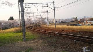2020.4.3 名鉄2230系 2233F旧1703F編成 桜満開笠松カーブ通過