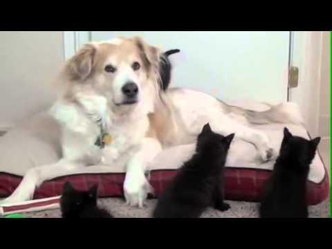 Migliori video di gatti e cani divertenti e teneri 7 for Youtube cani e gatti