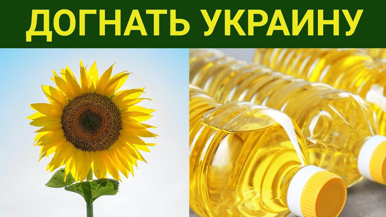 В России строят больше домов, чем при СССР / Догоняем Украину по подсолнечнику / Юрлиц всё меньше