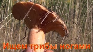 Ищем грибы ногами и на ощупь 22 09 2018 сибирь тайга Лекарственные растения полей и лесов тихая охот