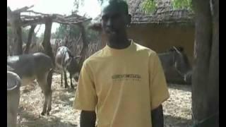 Moussa et son taureau.avi