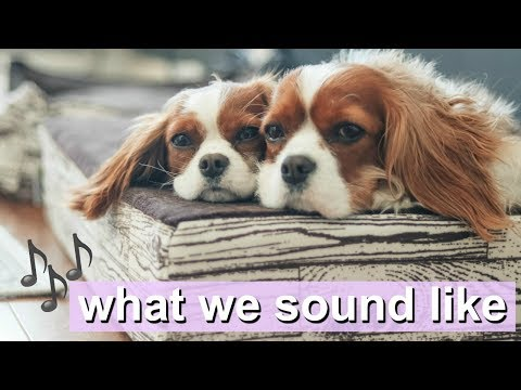 WHAT WE SOUND LIKE | Dog sounds | Cavalier King Charles