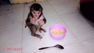 Download Mp3 Baby Monkey Eat Noodles | Anak Monyet Makan Mie Instan
