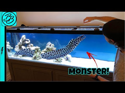 Terrifying SEA MONSTER INVADES My Aquarium