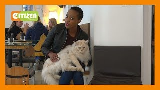 | VIENNA CAT CAFÉ | Four legged customers enjoy the VIP treatment