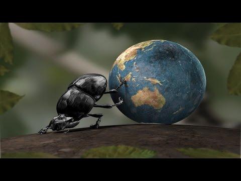Жуки-говновозы и навозный шарик