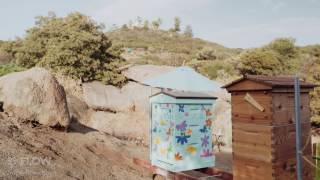 How to be a Flow hive beekeeper - the importance of a mentor