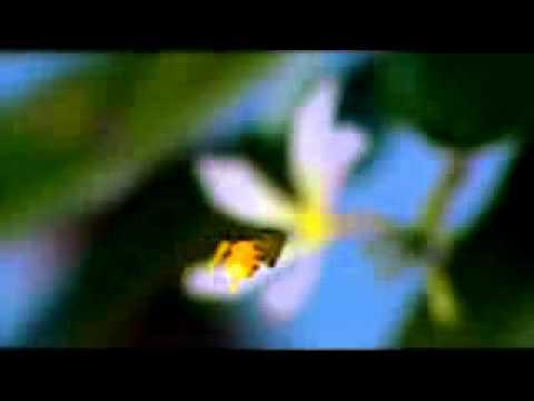 fragrand nature video ringtone