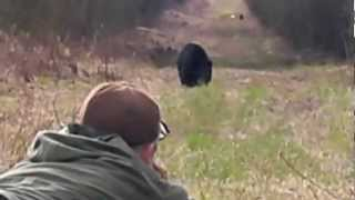 Close Encounter Spot & Stalk Black Bear Hunting Alberta Canada with Wide North Outfitters