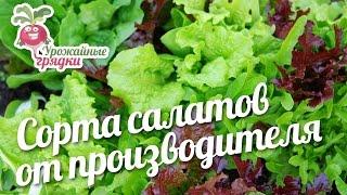 Сорта салатов от производителя #urozhainye_gryadki