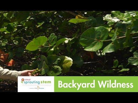 Virtual Sprouting STEM: Backyard Wildness
