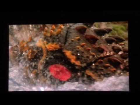Battra Larva- Godzilla vs. Mothra OST