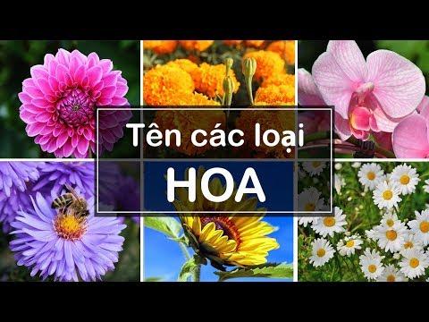 TÊN CÁC LOẠI HOA - Names of flowers