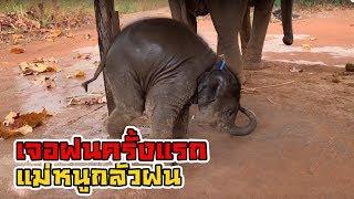 (ตอนที่ 1) Rain #ฝน เมื่อลูกช้างเจอฝนครั้งเเรก babyelephant