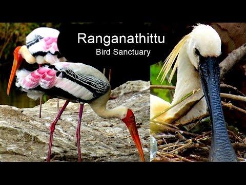 Ranganathittu Bird Sanctuary in Karnataka - India Travel