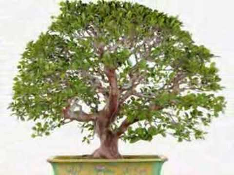 Taiwan Bonsai Creator Association