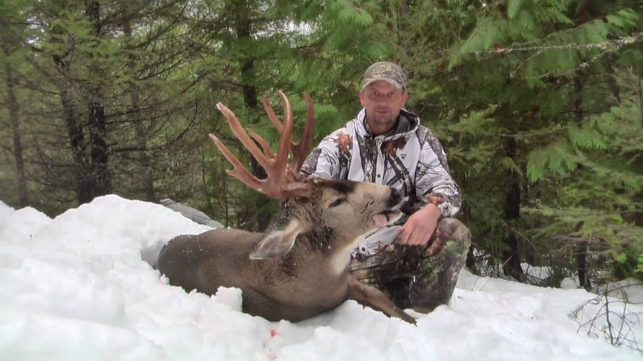 Vancouver Island Blacktail Deer Record Book