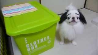 Смешные собаки с фэйковыми бровями. Подборка Топ 7