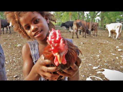 Farm Life - Dominican Republic