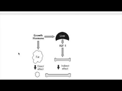 Somatomedin (insulin like growth factor----IGF)
