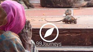 Indien Rattentempel Deshnok  - Karni Mata Tempel Indien -  Indien Rajasthan Bikaner Reisebericht