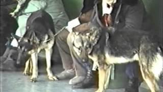 Первая всесибирская выставка собак 6-7 ноября 1993 года