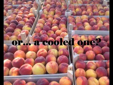 Fruits from Moldova: apricots, peaches and plums