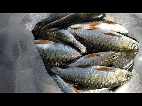 aadhi khola || Fishing || aadhi khola ko tirai ma ||